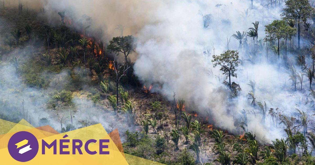 Tíz-húsz éven belül szavannává válhat az amazóniai esőerdő « Mérce