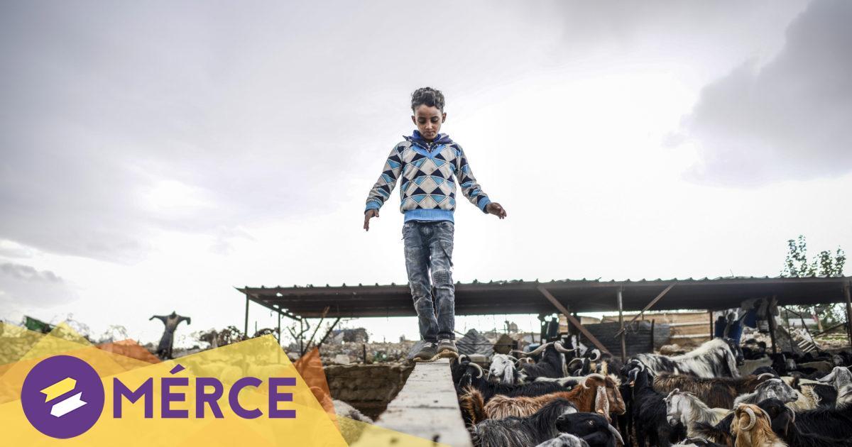 Guardian: Izrael megkezdte a telepesek oltását, a palesztinoknak még várniuk kell